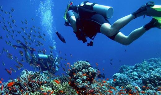 scuba-diving